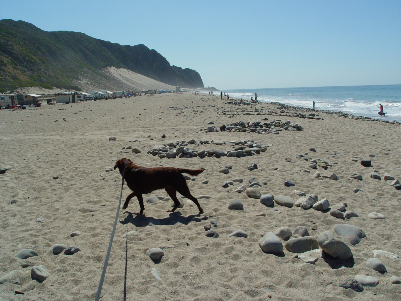 Dog On Beach Point Mugu State Park Ca